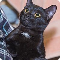 Adopt A Pet :: Suzie - Elmwood Park, NJ