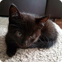 Adopt A Pet :: Bjorn - Blackstock, ON