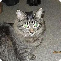 Adopt A Pet :: Laila - Albemarle, NC