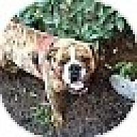 Adopt A Pet :: Meatball - conyers, GA