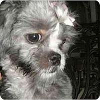 Adopt A Pet :: Fiona - Mooy, AL