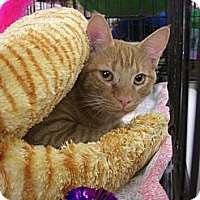 Adopt A Pet :: Frito - Chesapeake, VA