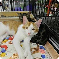 Adopt A Pet :: Andrea - Redondo Beach, CA