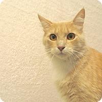 Adopt A Pet :: Kramer - Foothill Ranch, CA