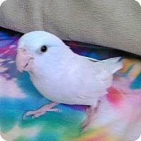 Adopt A Pet :: Skye - Tampa, FL