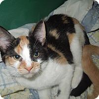 Adopt A Pet :: Queenie - Medina, OH