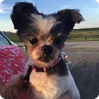 Adopt A Pet :: Kimmie - LEXINGTON, KY