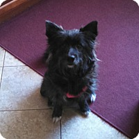 Adopt A Pet :: Gemma - Plainfield, IL