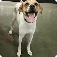 Adopt A Pet :: Jack - Adoption Pending - Gig Harbor, WA