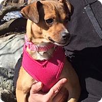 Adopt A Pet :: LEIA - Rancho Cucamonga, CA