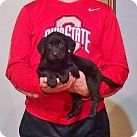 Adopt A Pet :: Molly - Lakewood, OH