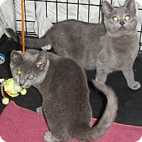 Adopt A Pet :: Berta & Bella - Kensington, MD