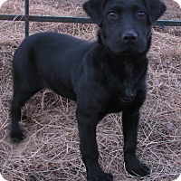 Adopt A Pet :: Magnum - Hartford, CT