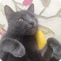 Adopt A Pet :: Lexi - Acushnet, MA