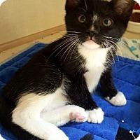 Adopt A Pet :: Rocky - Key Largo, FL
