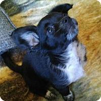 Adopt A Pet :: Jamaica - Meridian, ID
