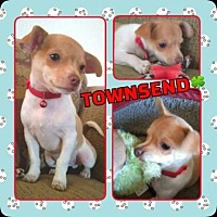 Adopt A Pet :: Townsend - Scottsdale, AZ