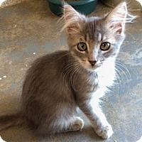 Adopt A Pet :: May - Greenwood, SC