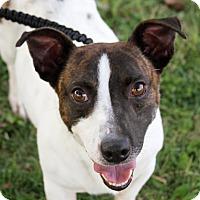Adopt A Pet :: Black jack - Joliet, IL