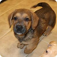Adopt A Pet :: Peety - Towson, MD