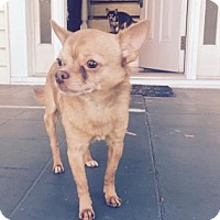 Adopt A Pet :: Victor - Bradenton, FL