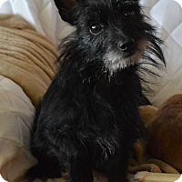 Adopt A Pet :: ~~ROSEANNA~~ - wilson, NC