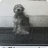 Adopt A Pet :: Whisp - Las Vegas, NV