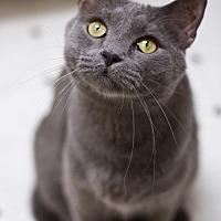 Adopt A Pet :: Hamilton - Grayslake, IL