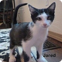 Adopt A Pet :: Jared - Portland, OR