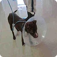 Adopt A Pet :: Rosie - Newnan City, GA