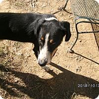 Adopt A Pet :: Moon - Evensville, TN