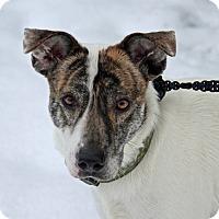 Adopt A Pet :: Brinny - Joliet, IL