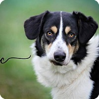Adopt A Pet :: Doc - Joliet, IL