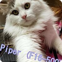 Adopt A Pet :: Piper - Tiffin, OH
