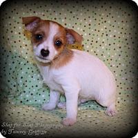 Adopt A Pet :: Simon - Lodi, CA