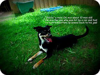 Chihuahua Mix Dog for adoption in Gadsden, Alabama - Jabba