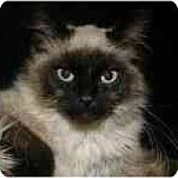 Adopt A Pet :: Wesley - Arlington, VA