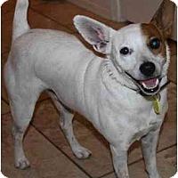 Adopt A Pet :: Charlie-Marlo - Gilbert, AZ