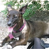 Adopt A Pet :: NINA - Courtesy Listing - Portland, OR