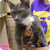 Adopt A Pet :: Smokey - Woodstock, GA