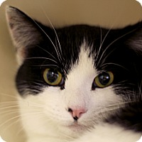 Adopt A Pet :: Luxi - Chicago, IL
