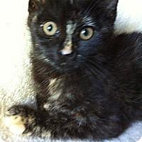 Domestic Shorthair Cat for adoption in Tracy, California - Elsa