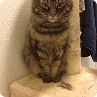 Adopt A Pet :: Toothless and Charcoal - Novato, CA