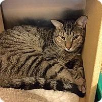 Adopt A Pet :: Dawson - Colmar, PA