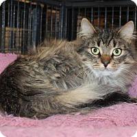 Adopt A Pet :: Shera/Julie - Hamilton, ON