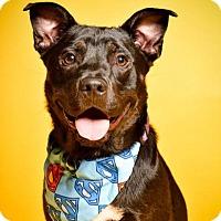 Adopt A Pet :: Caesar - Blacklick, OH