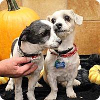 Adopt A Pet :: JJ and Boomer - Ogden, UT