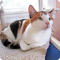 Adopt A Pet :: Madrid - Broomall, PA
