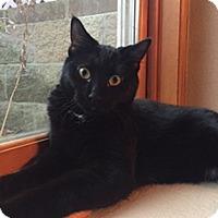 Adopt A Pet :: Rosalie - Owatonna, MN