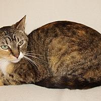 Adopt A Pet :: Lady - Jackson, MS